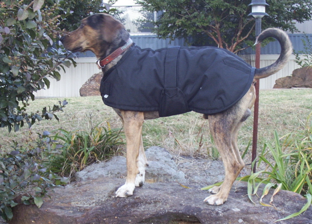 Insulated Dog Blanket  Xlg